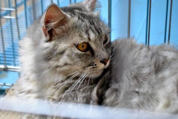 Pet Store Cat photo