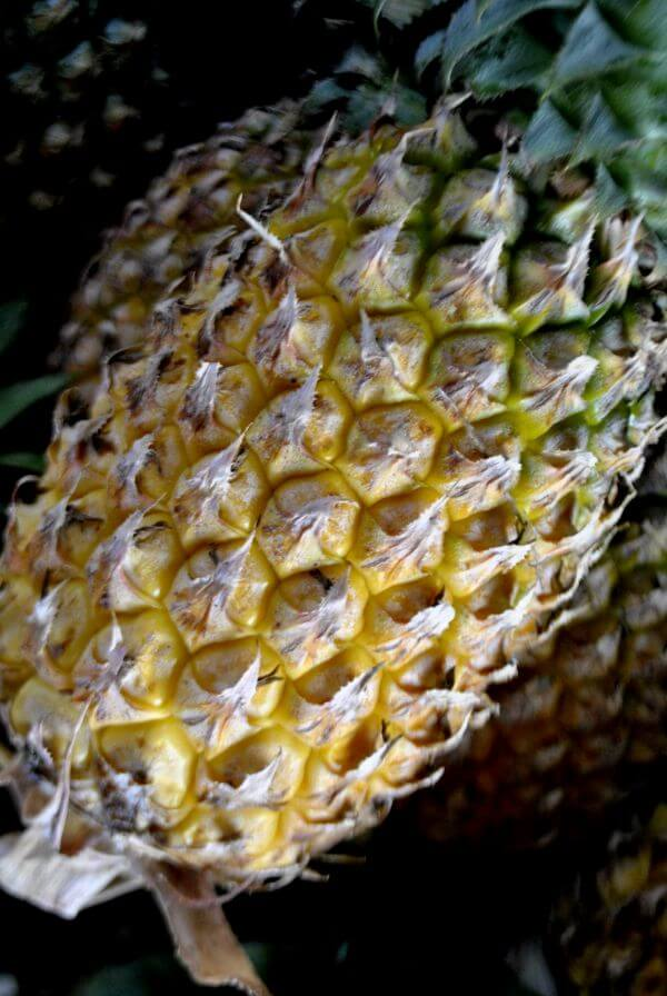 Pineapple photo