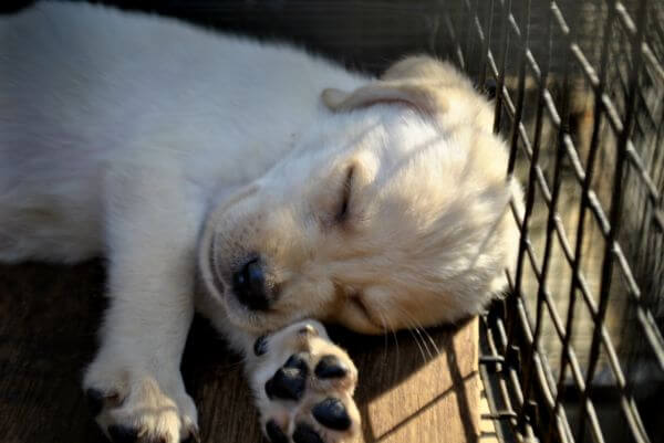 Puppy Sleeping photo