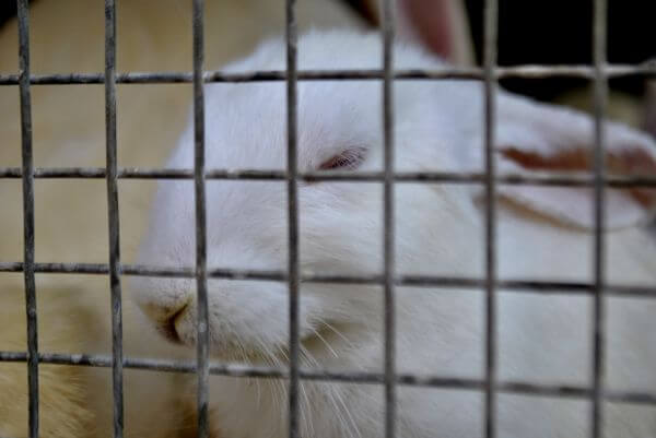 Rabbit In Cage photo