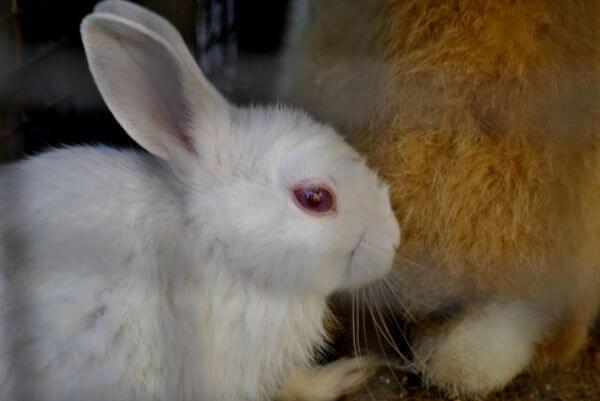 Rabbit photo