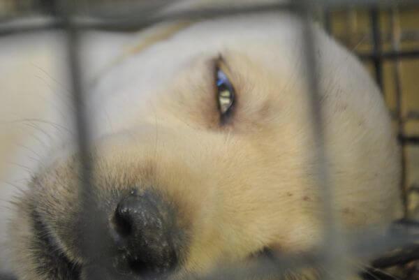 Sad Dog photo