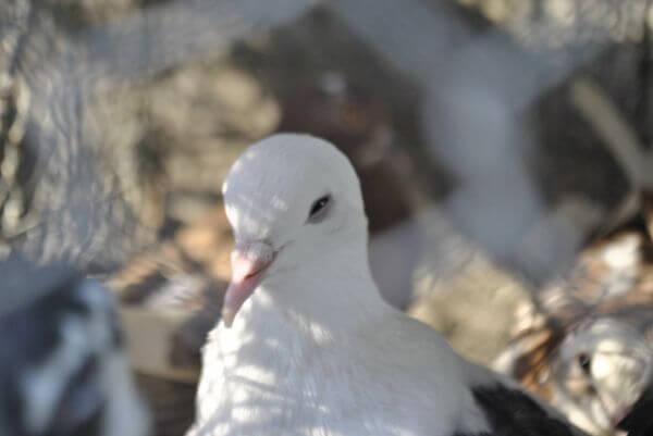 White Bird Pet Store photo