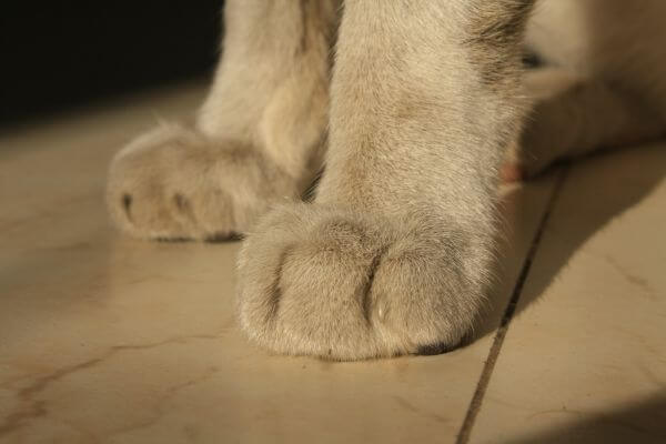 Cat Paws Closeup photo