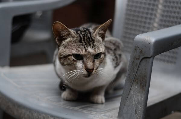 Cat Sitting On Chair photo