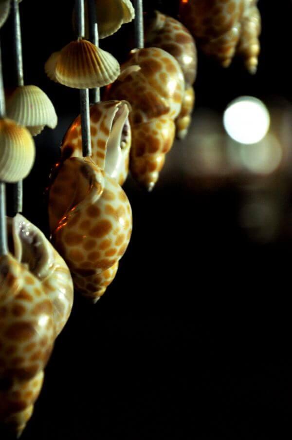 Sea Shells Decoration photo
