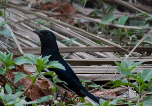 Black Bird Ground photo