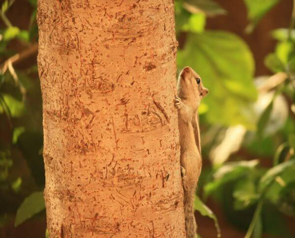 Cute Squirrel Climbing Tree photo