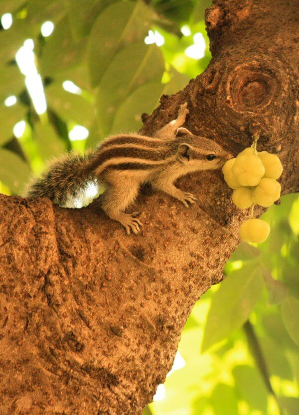 Cute Squirrel Fruit photo