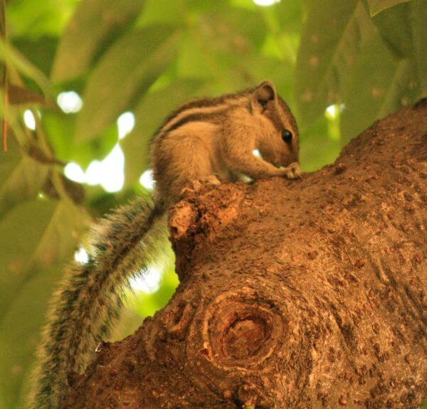 Squirrel Cute Animal photo