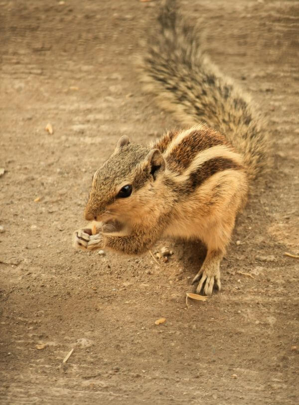 Squirrel Ground Beautiful photo