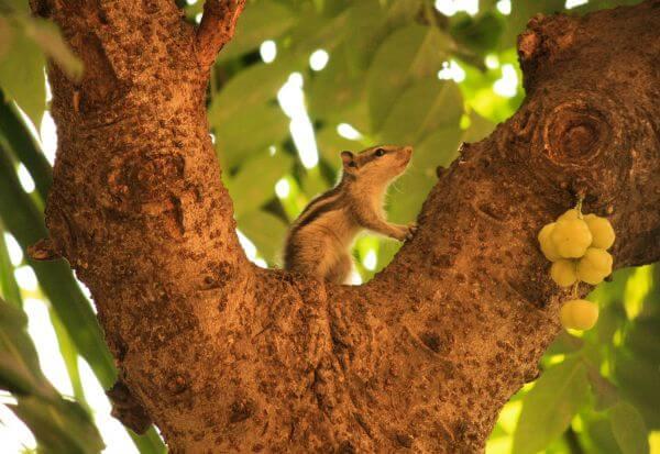 Squirrel Sitting On Tree photo