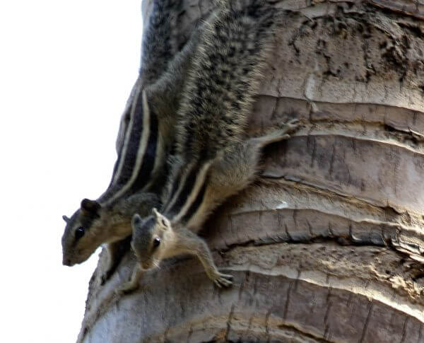 Two Squirrels Couple photo