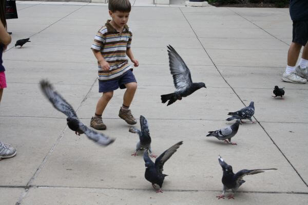 Child Running Pigeons Flying photo