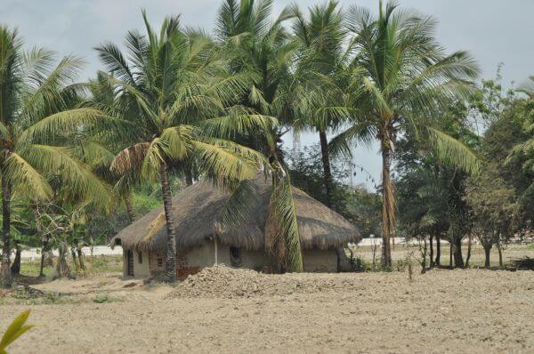 Hut Amid Coconut Trees photo