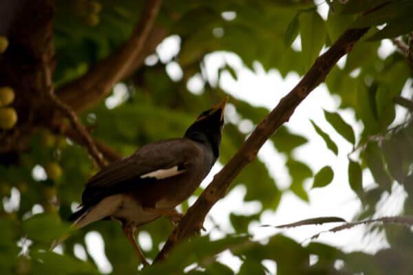 Myna Bird Branch photo