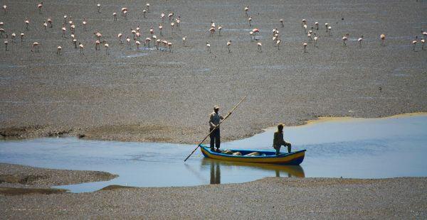 Boat Flamingos photo