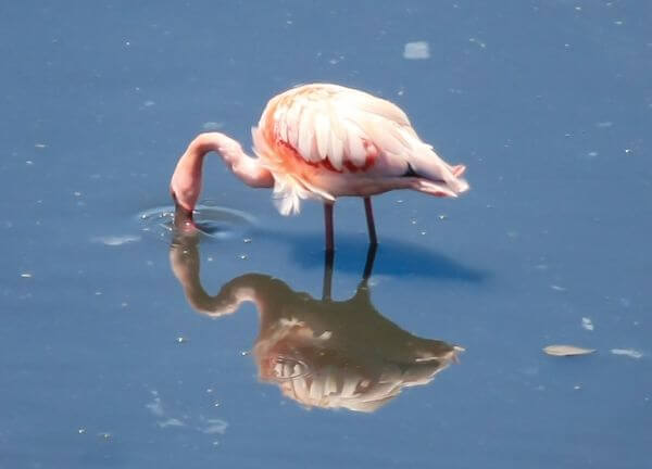 Flamingo Birds Water photo