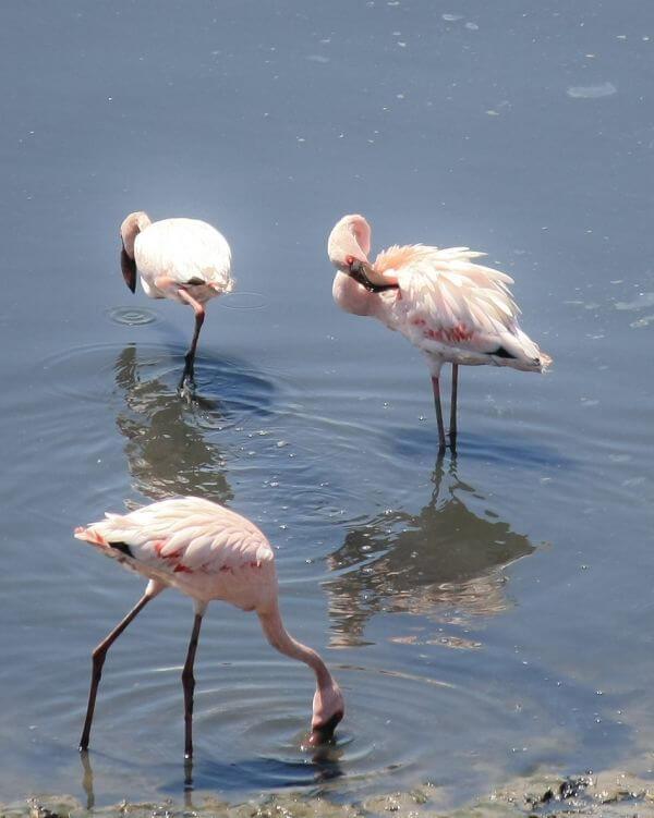 Flamingo Pink White Bird photo