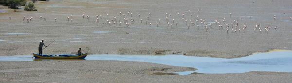 Flamingos Boat Nearby photo