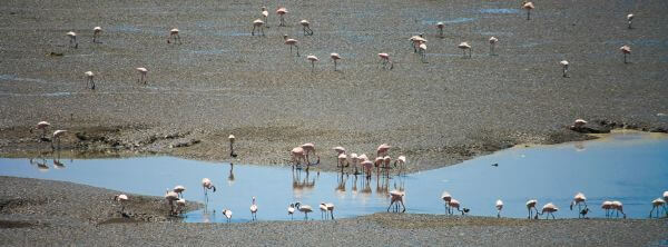 Flamingos Indian Creek photo