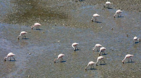 Flamingos Standing photo