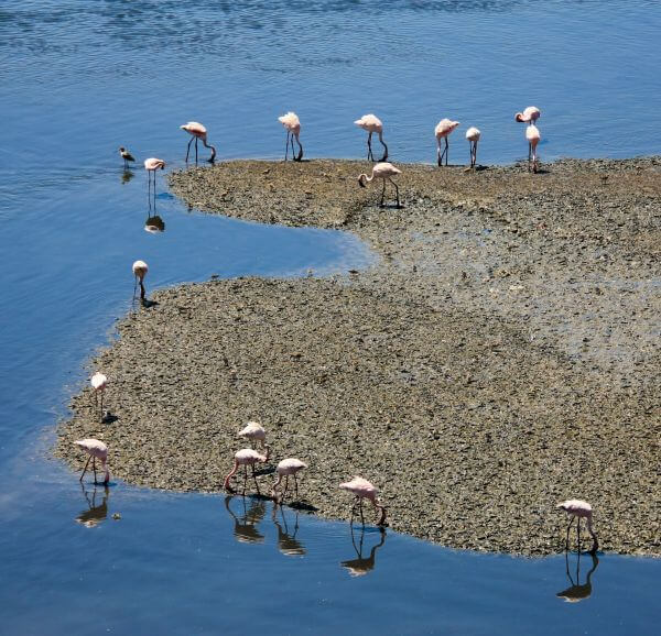 Flamingos Water Blue photo