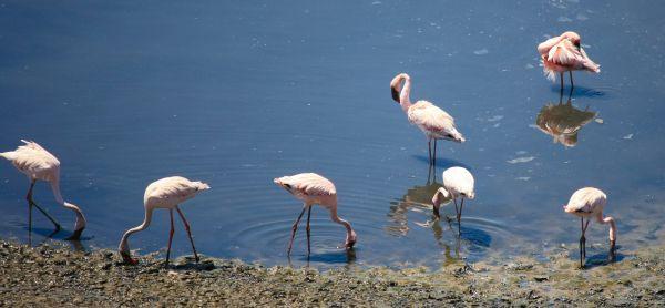 Flamingos Water photo