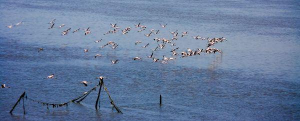 Flying Flamingos Birds photo