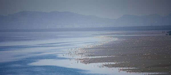 Thousands Of Flamingos photo