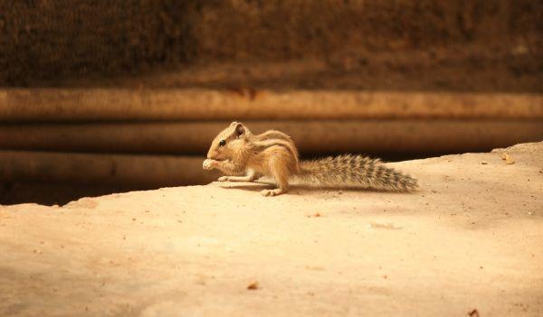 Cute Animals Squirrel photo