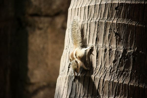Squirrel Climbing Tree photo