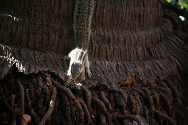 Squirrel Closeup photo