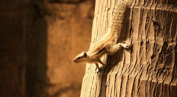 Squirrel Coconut Tree Climb photo