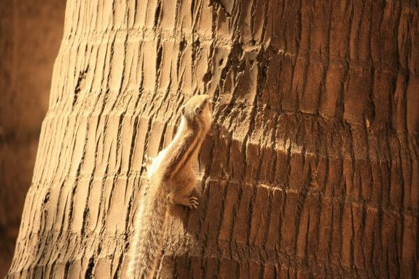 Squirrel Coconut Tree Go Up photo