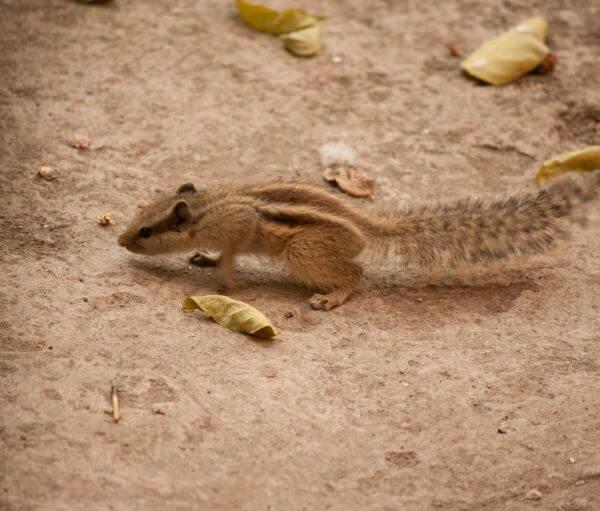 Squirrel Cutie Pie photo