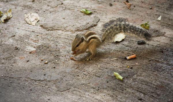 Squirrel On Ground photo