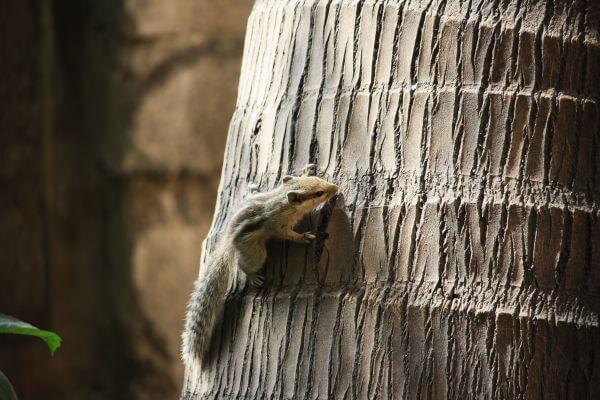 Squirrel Tree photo