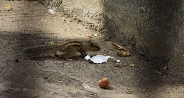 Squirrel Walk photo