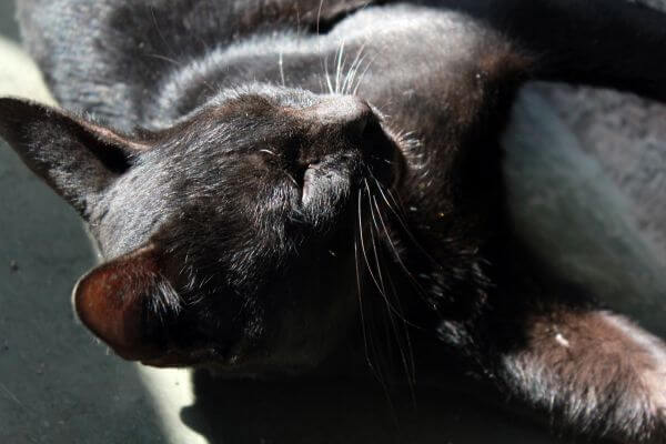 Black Cat Sleeping Position photo