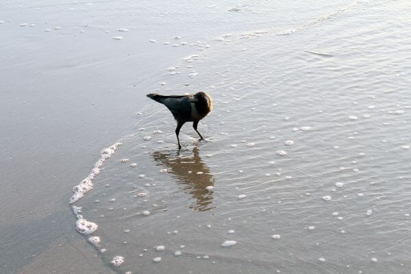 Black Crow Near Sea Shore photo