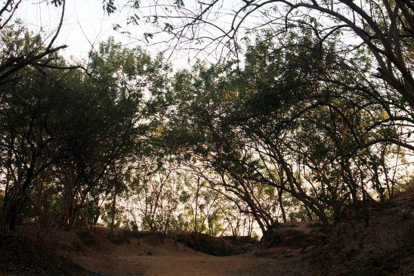 Trees Bushes Shrubs photo