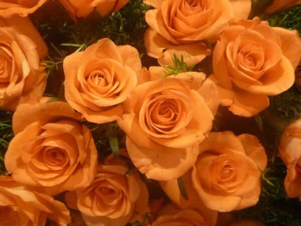 Bunch Of Orange Roses photo
