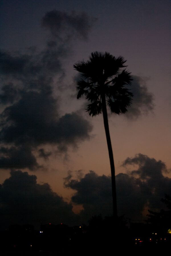 Coconut Tree Evening photo