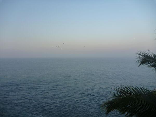 Calm Sea Palm Leaves photo
