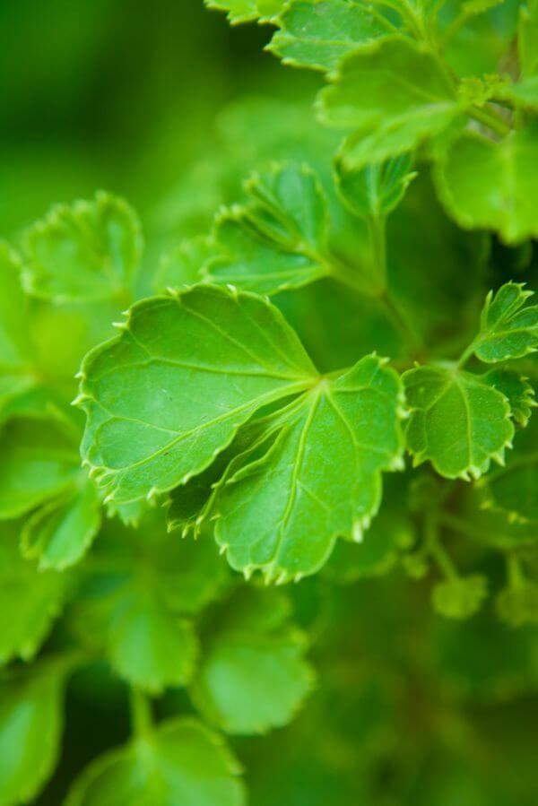 Beautiful Green Leaves photo