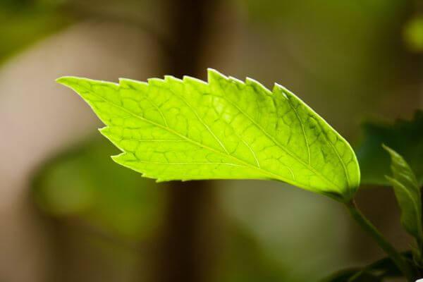 Beautiful Single Leaf photo