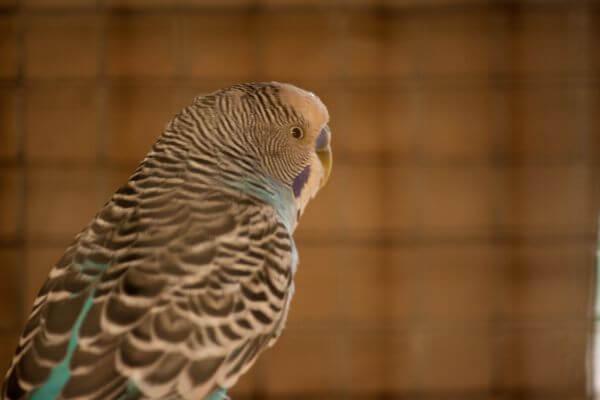 Bird Cage photo