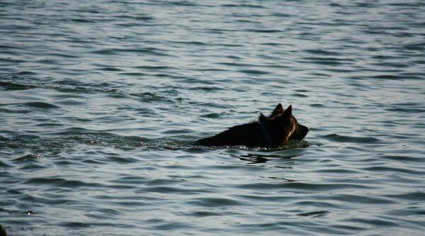 Dog Swimming Lake photo