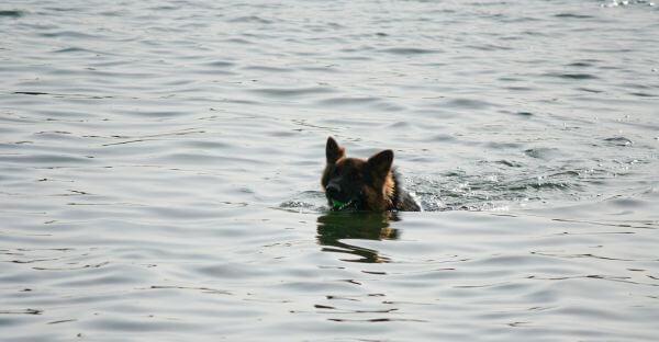 Dog Swimming Water photo